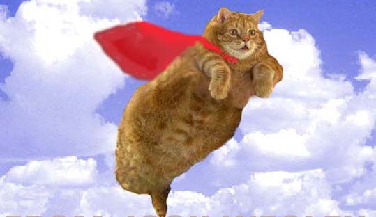flying cat lookalike